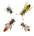 set of flying insects vector image