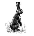 standing hare vector image