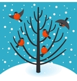 Stock bullfinch on tree vector image vector image
