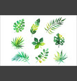 tropical leaves set jungle trees botanical vector image vector image