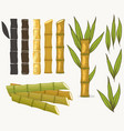 sugar cane set cane plant sugarcane harvest vector image