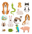 big set of different domestic animals cats vector image