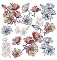 big collection magnolia flowers for design vector image vector image