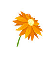 flat icon of daisy with bright orange vector image