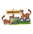 mongooses standing on zoo sign vector image vector image