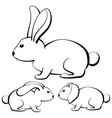 rabbits-1 vector image
