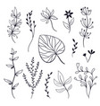 set of leaves and plants vector image vector image