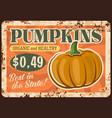 vegetable farm pumpkin rusty metal plate vector image vector image