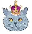funny British cat in gold crown vector image vector image