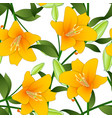 orange lily on white background vector image vector image