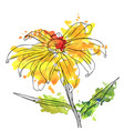 drawing flower of daisy vector image