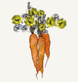 fashion botanical with carrot and flowers vector image vector image