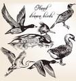 hand drawn birds set for design vector image