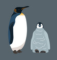 penguin and little penguin vector image vector image
