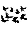 set of silhouette flying raven bird with leg vector image