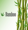 Bamboo text frame vector image vector image