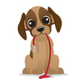 cute puppy dog with leash vector image vector image