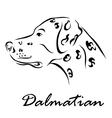 Dalmatian vector image