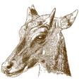 engraving nilgai or blue bull vector image
