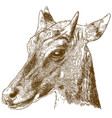 engraving of nilgai or blue bull vector image vector image