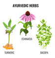 turmeric with rhizomes bacopa aquatic plant vector image vector image