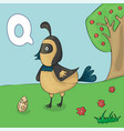 alphabet letter q and quail abc book vector image