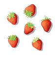 derry strawberry vector image