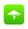 tree with a spreading crown icon digital green vector image