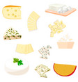 colorful of cheese vector image