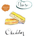 a piece organic sharp cheddar cheese vector image vector image
