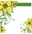 hand drawing narcissus flowers background vector image vector image