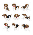 set cute and funny beagle vector image vector image