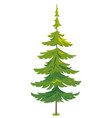 one tiny spruce tree isolated vector image vector image