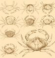 set 9 vintage engraved crabs vector image