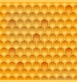 stock realistic honeycomb vector image