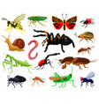 cartoon insects wood and garden cute insects vector image vector image