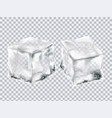 transparent ice cubes vector image
