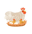 cute hen on nest with eggs and hatched chickens vector image