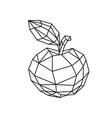 low poly a tasty apple outline drawing retro vector image vector image