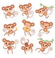 baby monkey wild cartoon animals playing vector image vector image