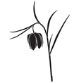 fritillaria meleagris vector image vector image