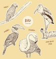 set of hand drawn sketch style exotic birds vector image vector image