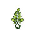 basic rgbmoringa and yoga logo vector image vector image