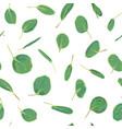 eucalyptus silver dollar greenery gum tree vector image vector image