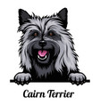 head cairn terrier - dog breed color image vector image vector image