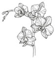 sketch orchid flower blossom vector image