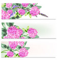 floral brochures set with flowers vector image vector image