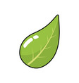 natural leaf of plant and exotic botany vector image vector image