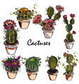 set of hand drawn cactuses for design vector image vector image