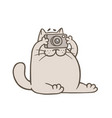 cute gray cat with camera vector image